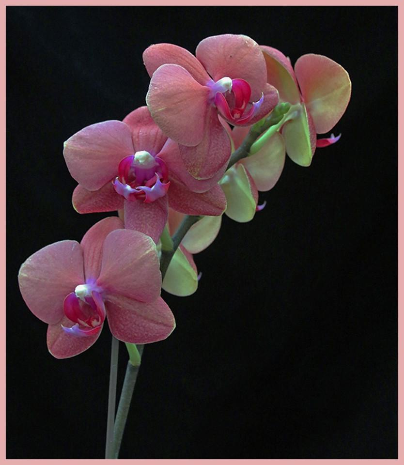 Orchid Beauties By Jenn Reisbeck Best of Class B