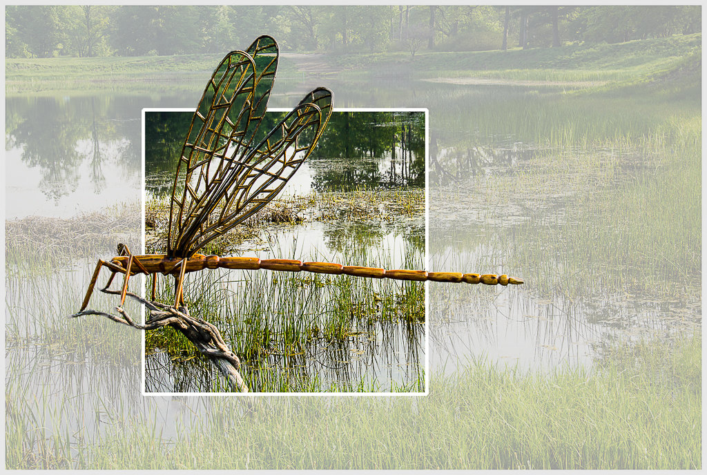 Dragonfly Escaping