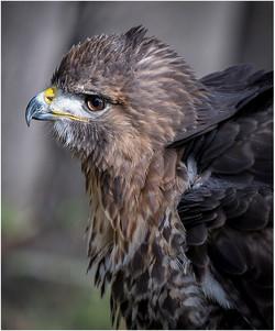 Hawkish