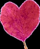 Heartleaf.png