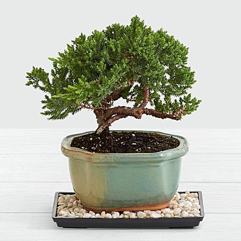 """Bonsai Planter """"Make and Take"""""""