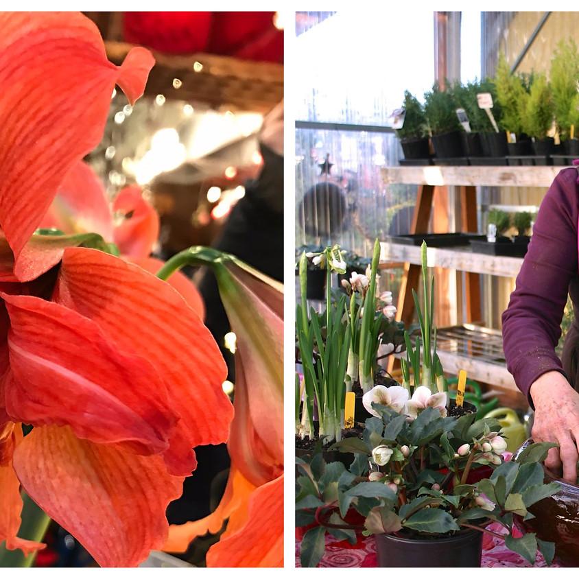 Amaryllis Planting Work Shop