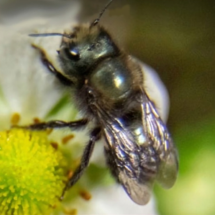 Mason Bee  Class