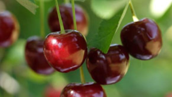 Cherry - 3-in-1