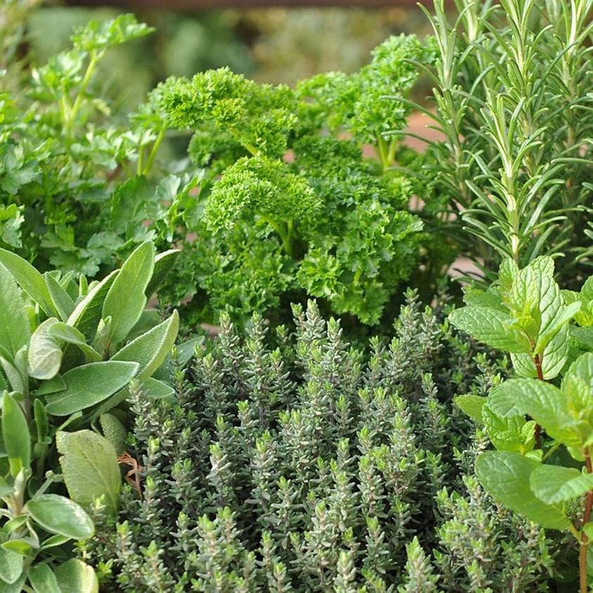 European Herb Pot Class
