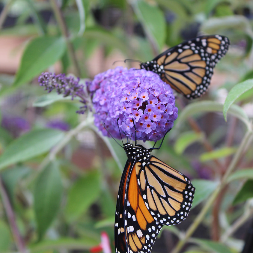 Growing A Pollinator Garden