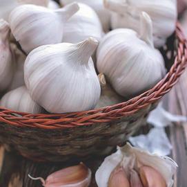 Softneck California Garlic