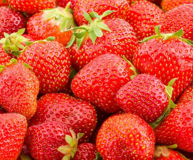 Bareroot Seascapes Strawberry