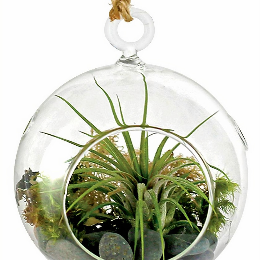 """""""Make It and Take It"""" Living Ornament -Class Is Full"""
