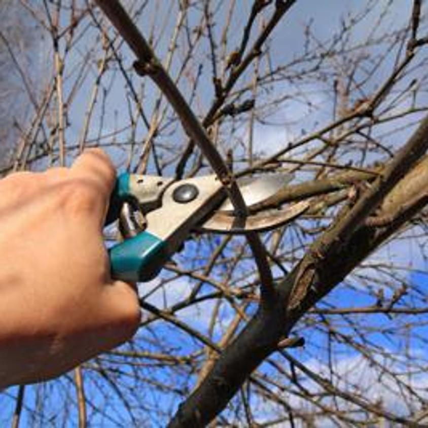 Pruning And Natural Gardening