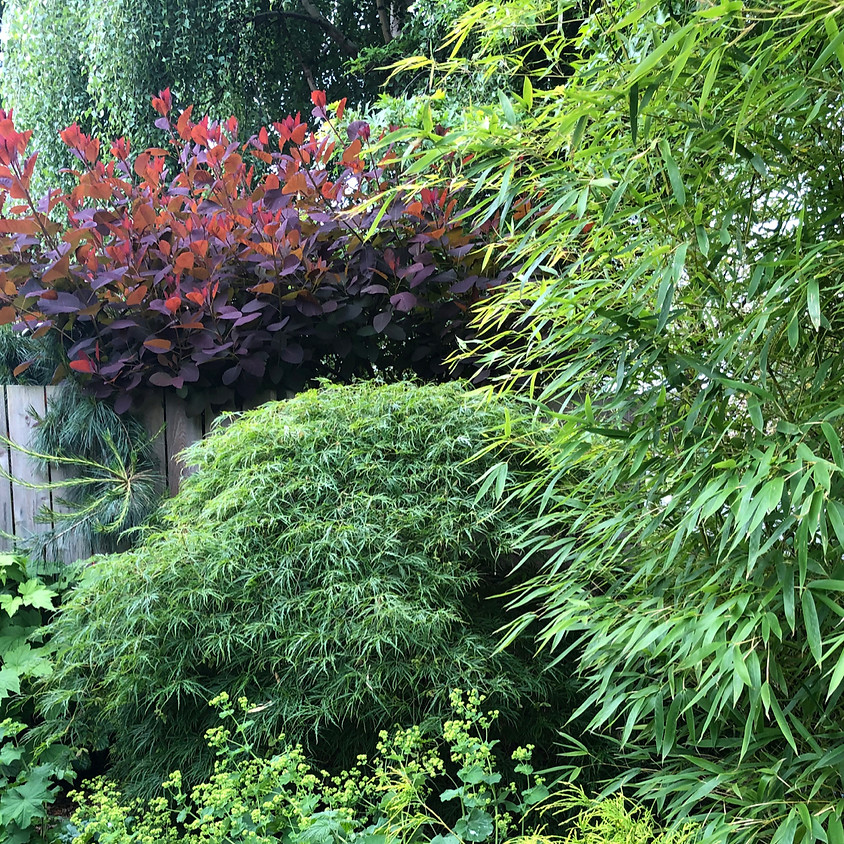 The Best Shrubs for Creating Hedges