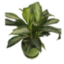 houseplant9EX.jpg
