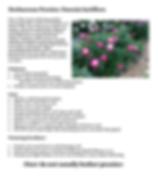 Screen Shot 2020-03-16 at 12.19.36 PM.pn