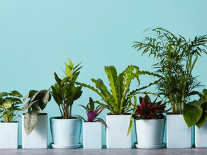 Fitting Houseplants into Your Life