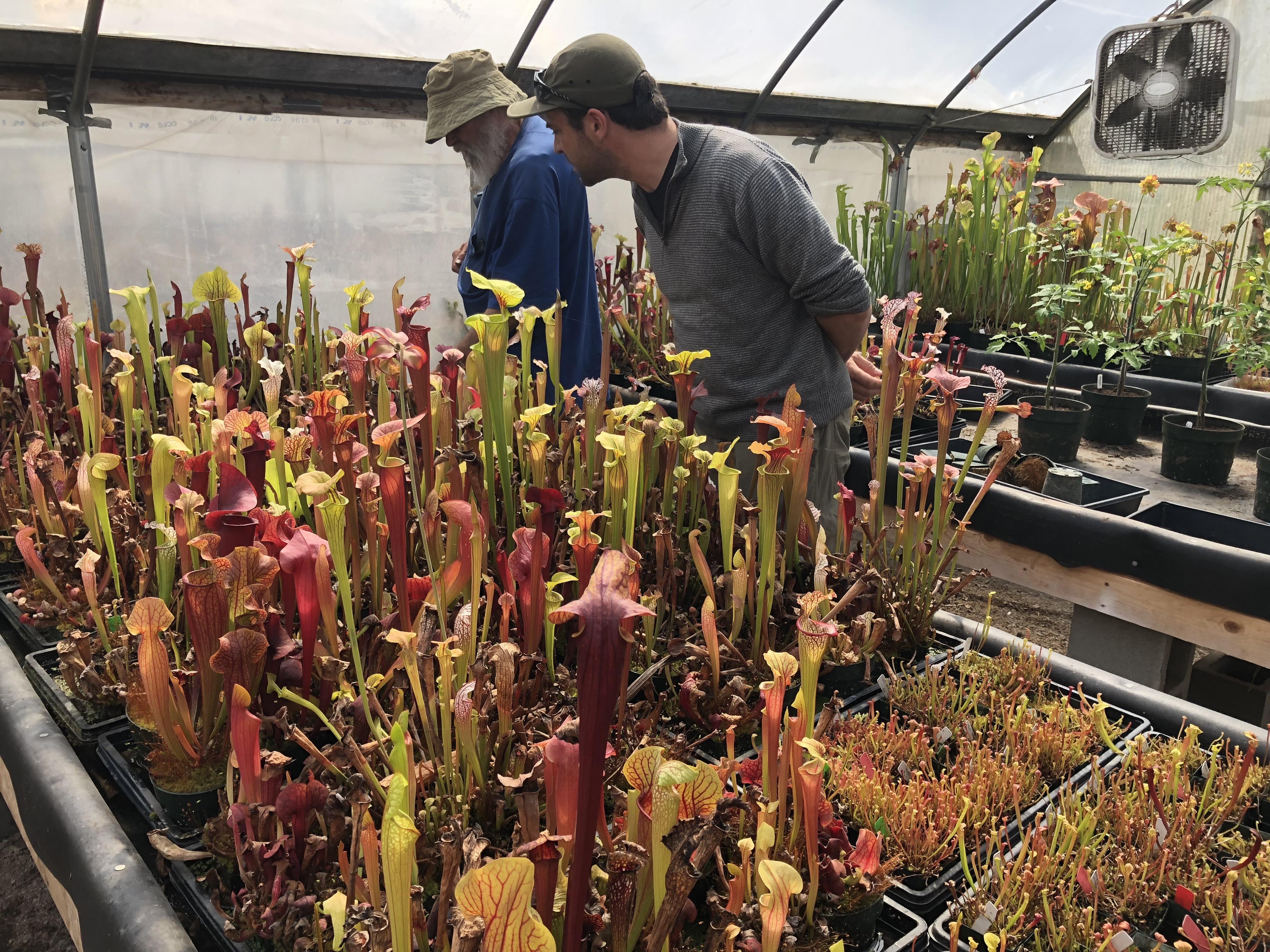 The Amazing World Of Carnivorous Plants