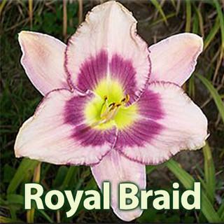 Royal Braid