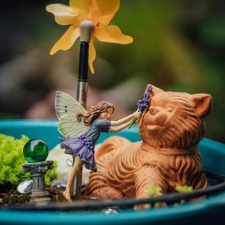 Ellen's Fairy Garden