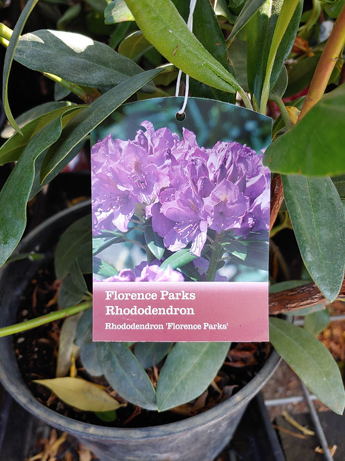 Rhododendron - Florence Parks