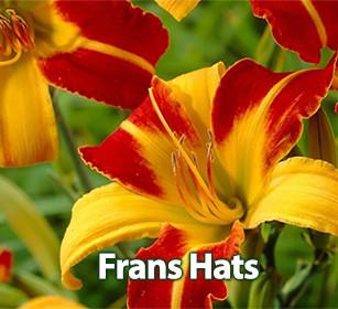 Frans Hats