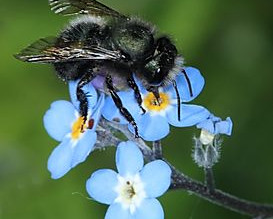 Discover Bee Keeping With Mason Bees