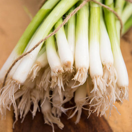 Green Banner Bunching Onions