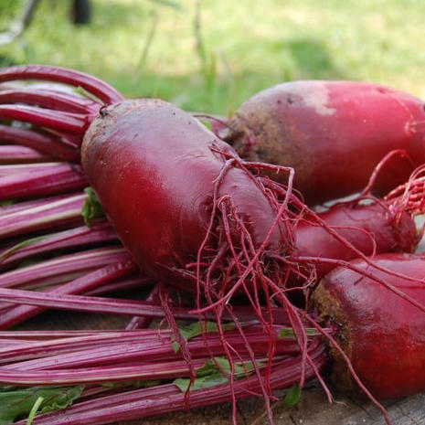 Early Red Beets