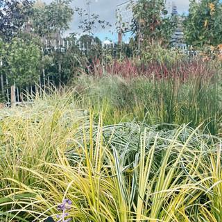 Assorted Grasses