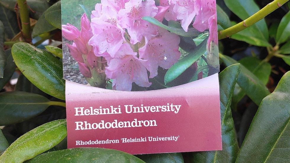 Rhododendron - Helsinki University
