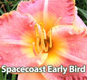 Spacecoast Early Bird