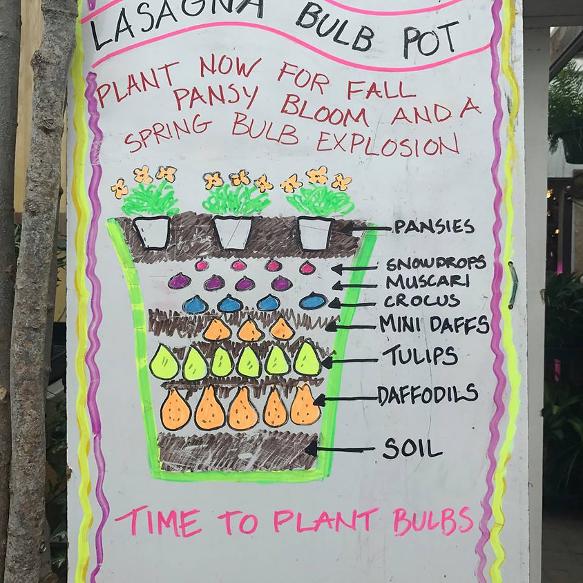 Lasagna Bulb Planter 3nd Class 1 PM