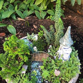 Miriam's Fairy Garden