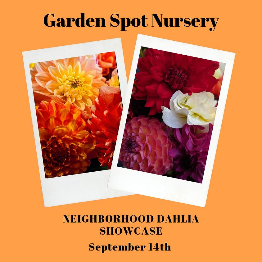 Neighborhood Dahlia Showcase