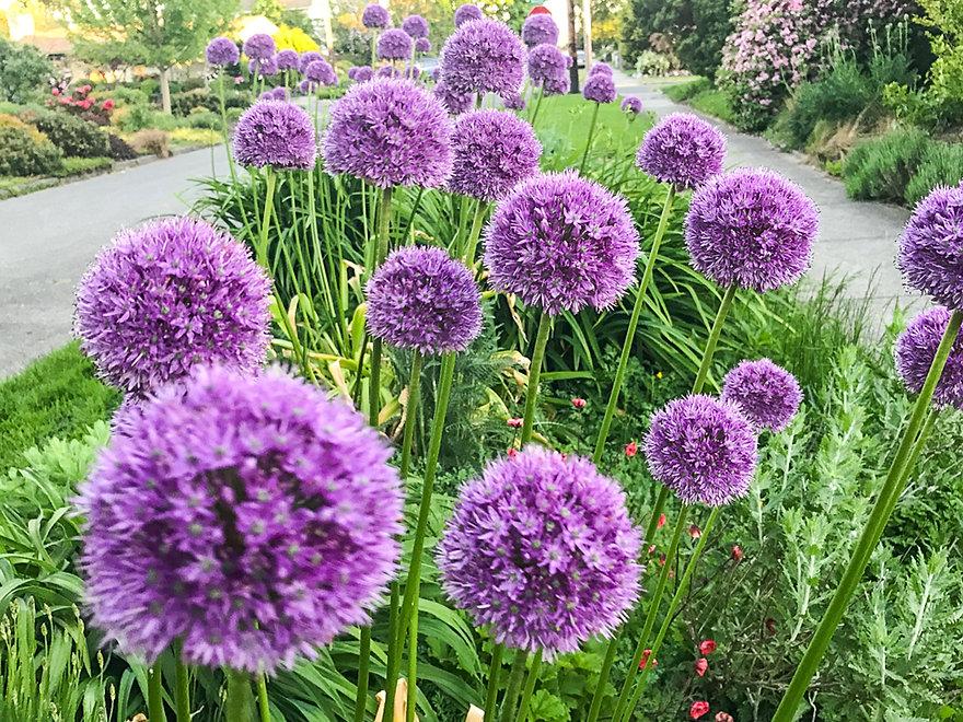 Gardenspot-spring (62 of 89).JPG