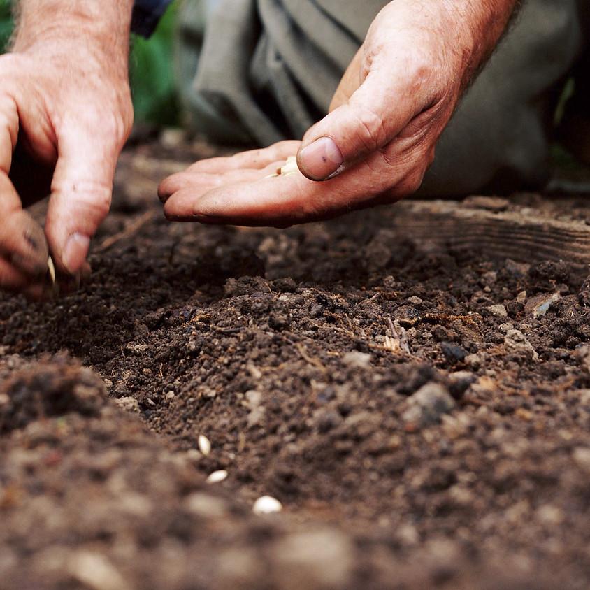Rotational Seeding with Kim