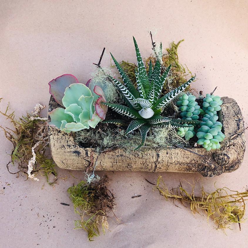 "Succulent Arrangement ""Make and Take"""