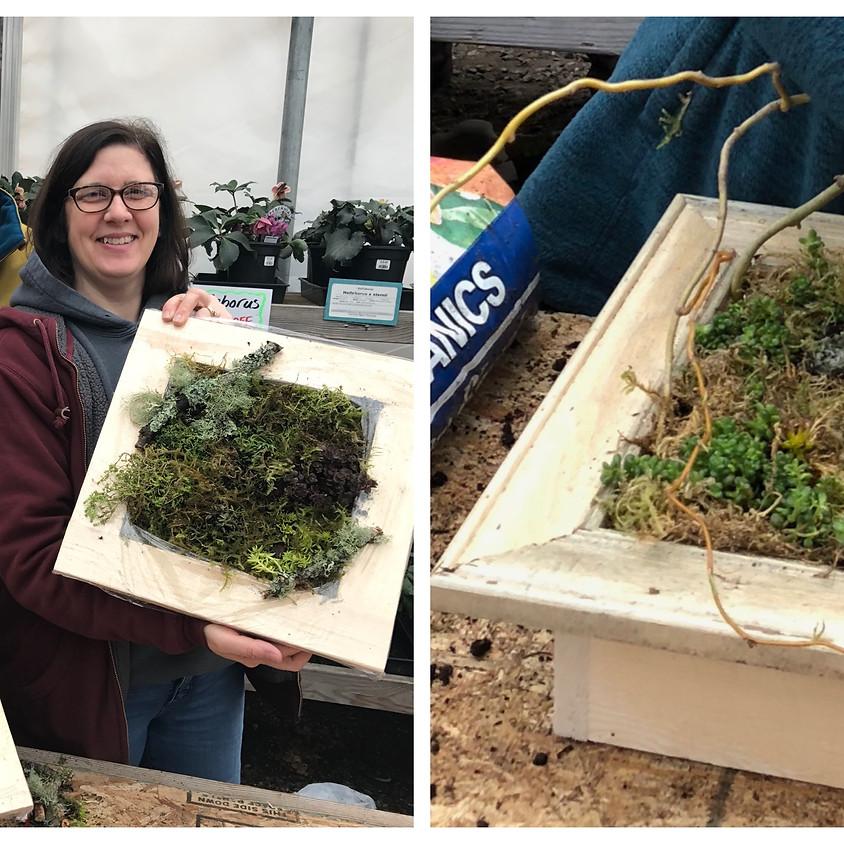 Plant and take a sedum frame with Katharine!