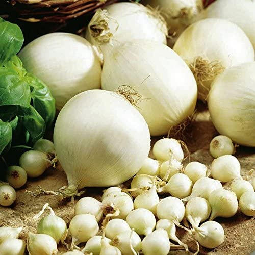 Dutch White Onions