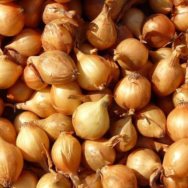 Dutch Yellow Onions