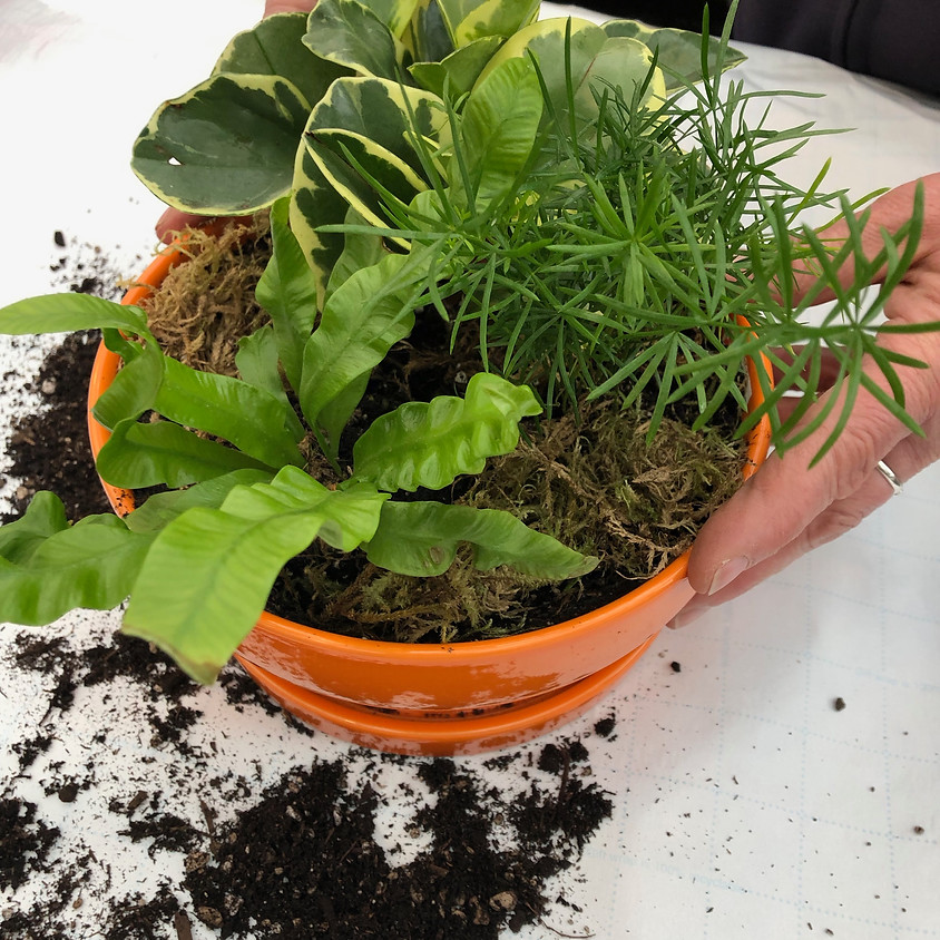 """Indoor Counter Garden """"Make and Take"""""""