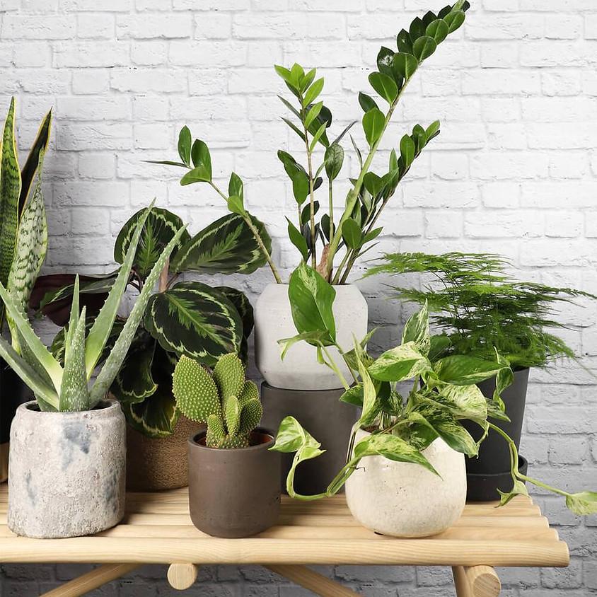 Top 5 House Plants with Debra