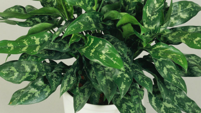 New House Plants Arrive Weekly