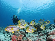 Colourful Fish 4 (Diving).jpg