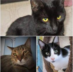 Bonnie, Tinker, Nicholas