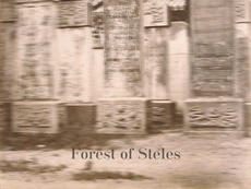 Forest of Steles