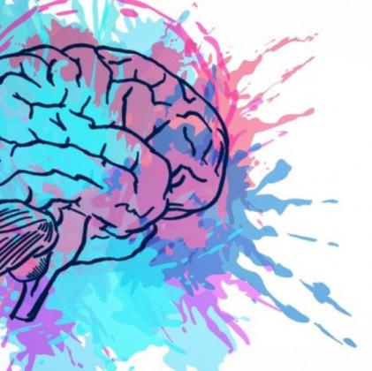 Datos curiosos del cerebro
