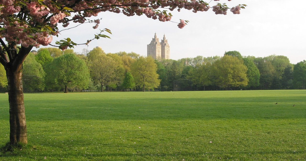 Central Park Great Lawn