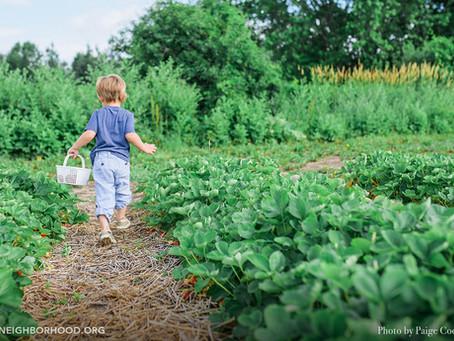Community Garden Adventures: A Toddler Runs Amok