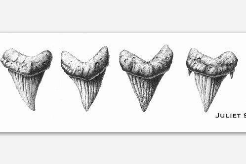 """Shark Teeth"" Sticker"