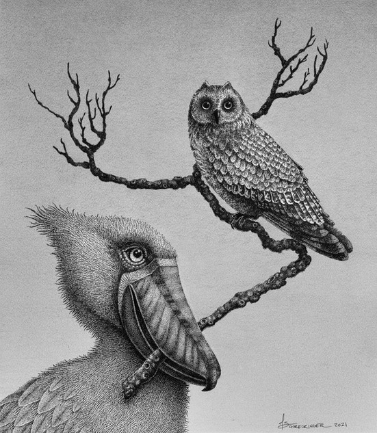 """Sherman and Shelia the Short-Eared Owl"""