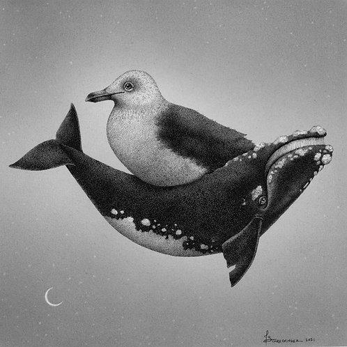 """Horton's Right Whale"" Archival Print"
